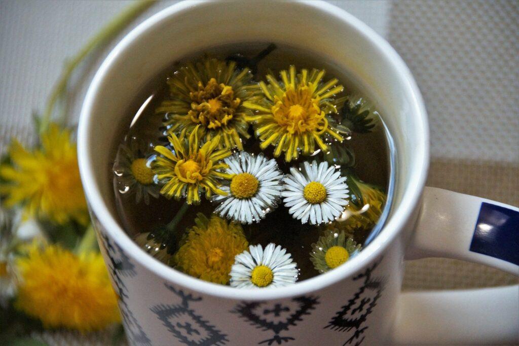 plantes-detox